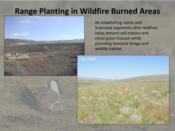 Range Planting in Wildfire Burned Areas