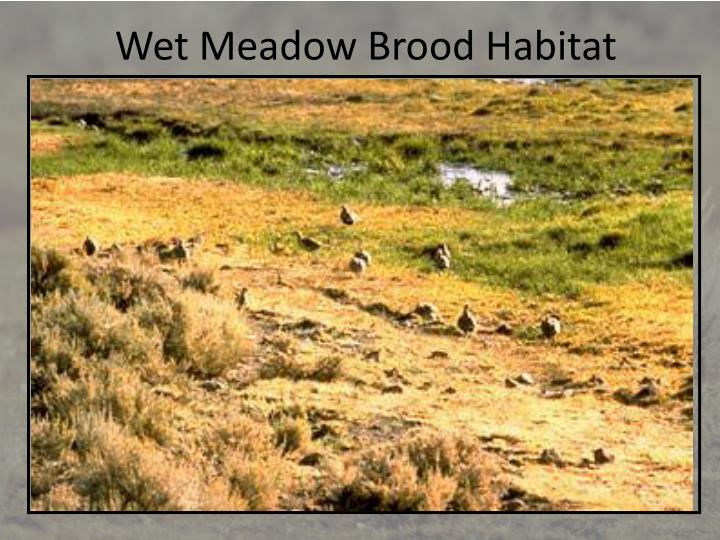 Wet Meadow Brood