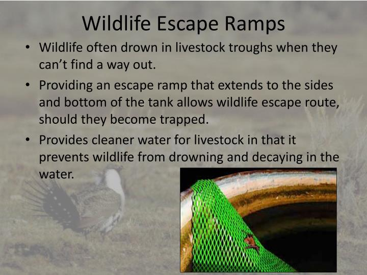 Wildlife Escape Ramps