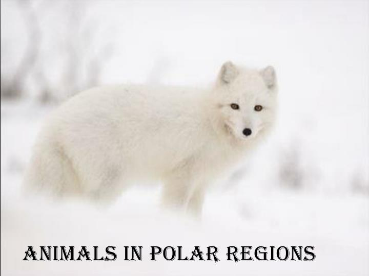 Animals in polar regions