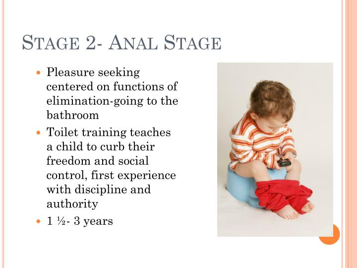 Stage 2- Anal Stage