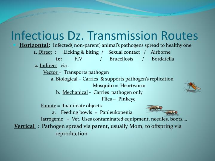 Infectious Dz. Transmission Routes