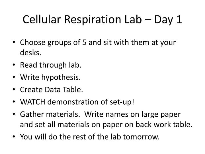 Cellular Respiration Lab – Day 1