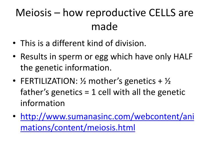 Meiosis – how reproductive CELLS are made