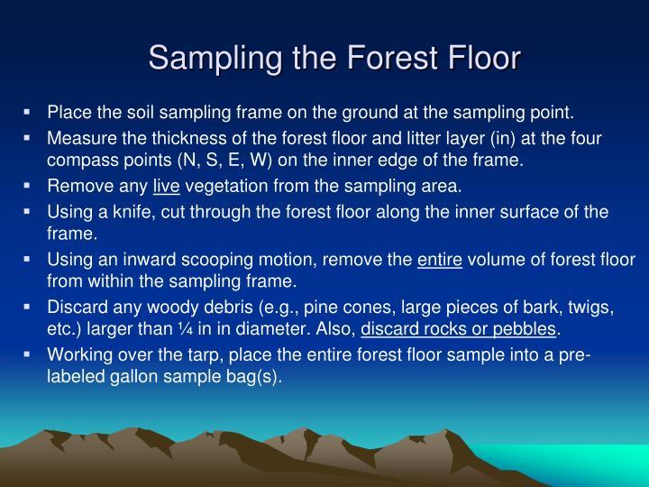 Sampling the Forest Floor