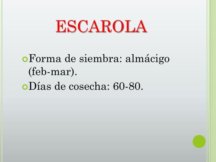 ESCAROLA
