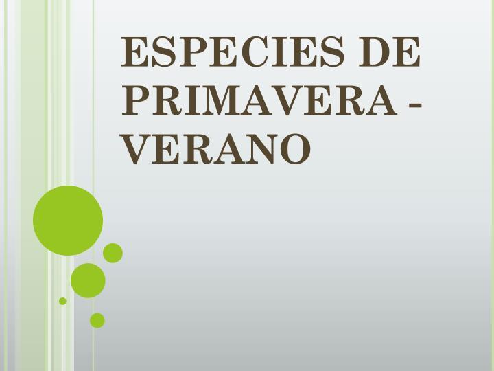 ESPECIES DE PRIMAVERA - VERANO