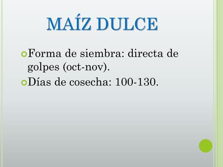 MAÍZ DULCE