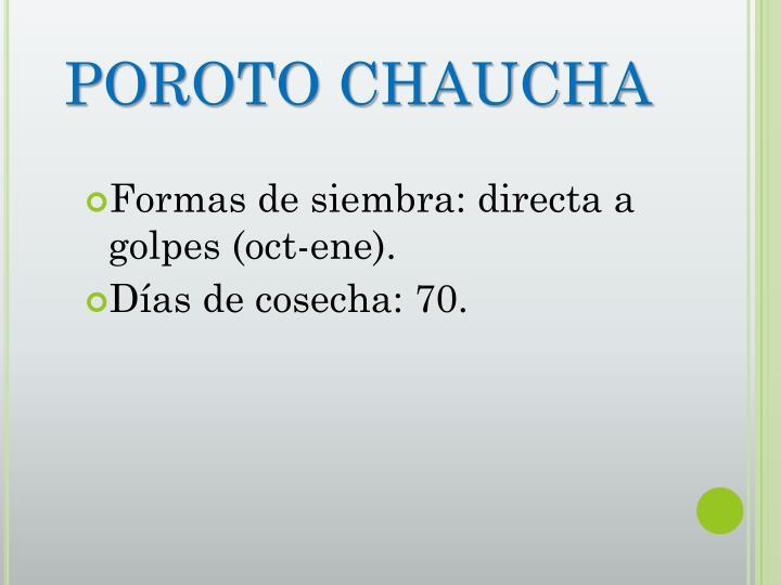 POROTO CHAUCHA