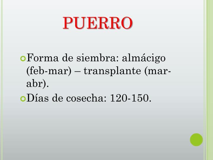 PUERRO