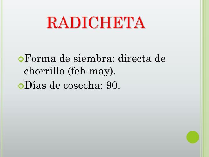 RADICHETA