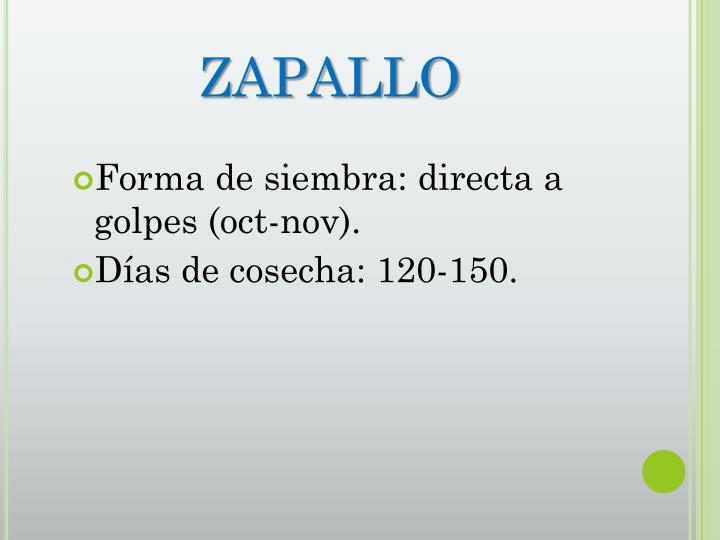 ZAPALLO