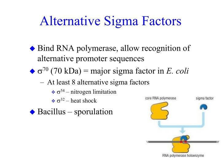 Alternative Sigma Factors