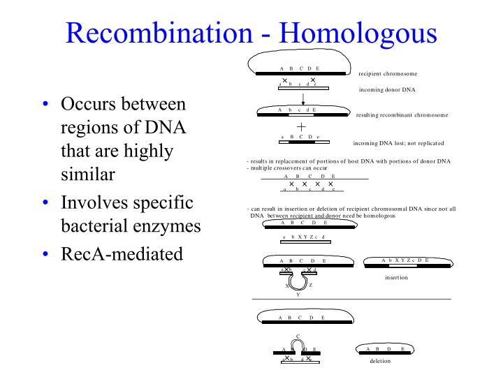Recombination - Homologous