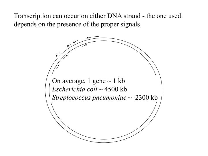Transcription can occur on either DNA strand - the one used depends on the presence of the proper signals
