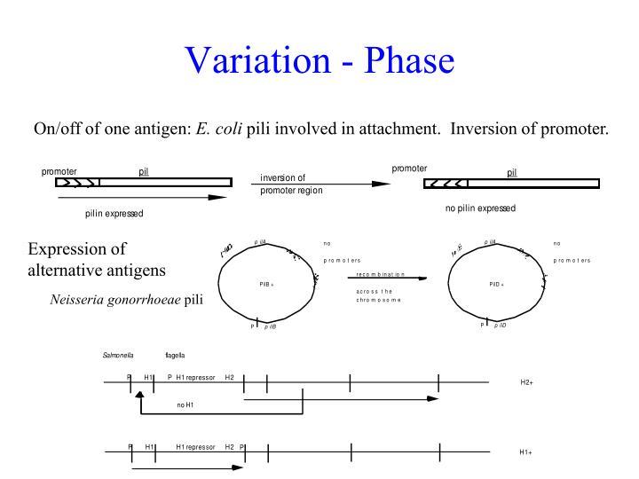 Variation - Phase