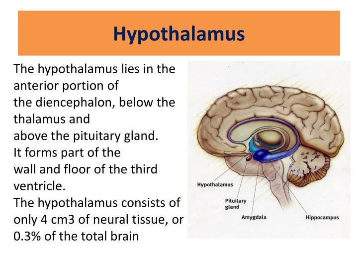 Hypothalamus