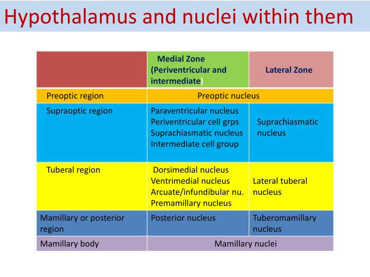 Hypothalamus and nuclei within them