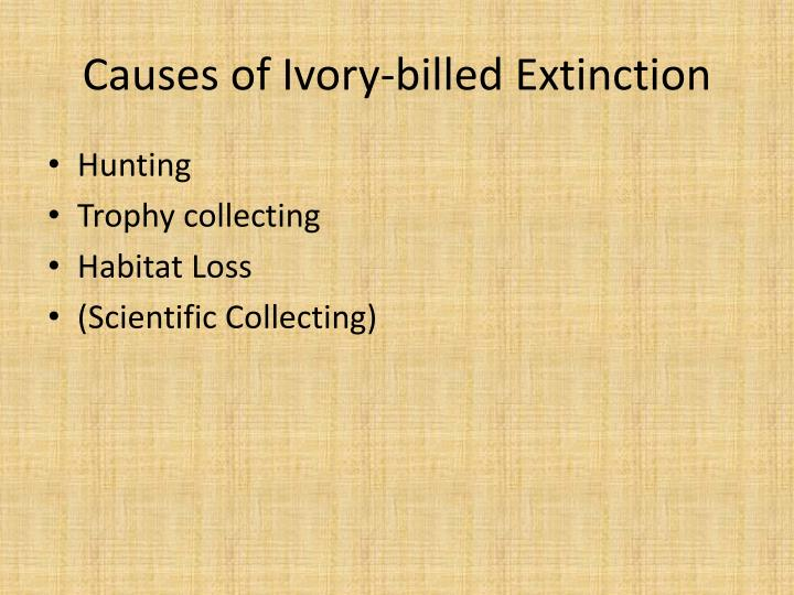 Causes of Ivory-billed Extinction