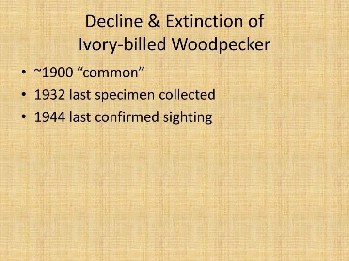 Decline & Extinction of