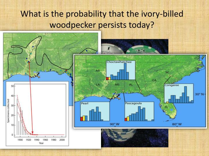What is the probability that the ivory-billed