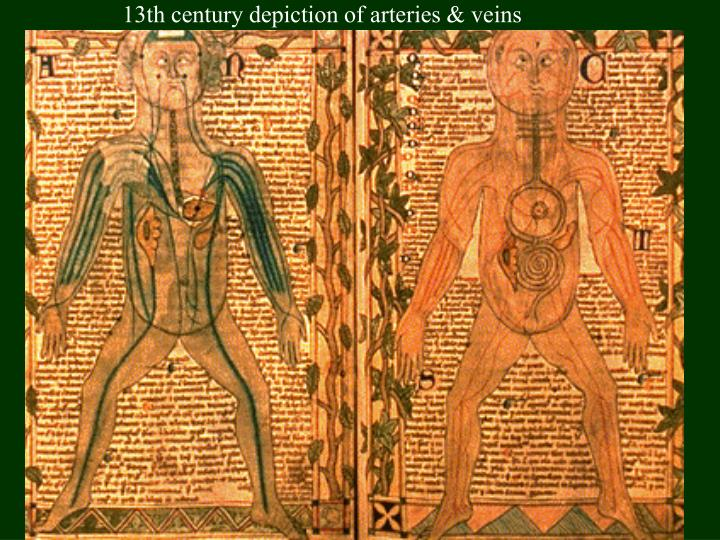 13th century depiction of arteries & veins