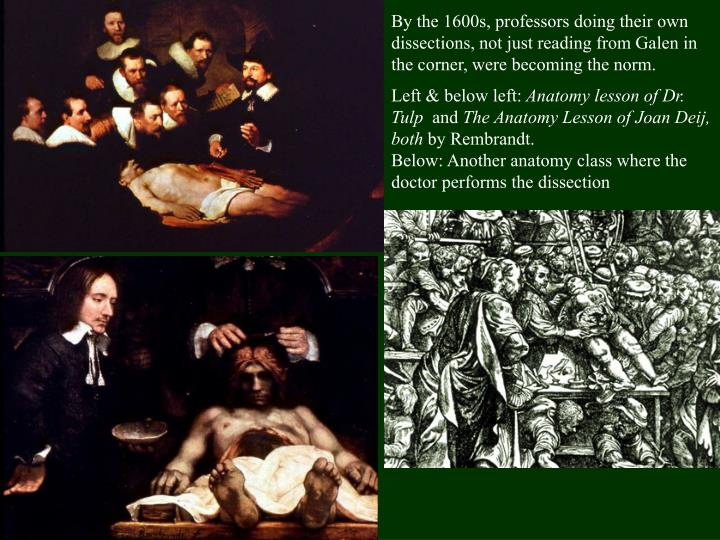 By the 1600s, professors doing their own dissections, not just reading from Galen in the corner, were becoming the norm.