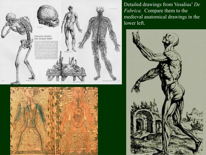 Detailed drawings from Vesalius'