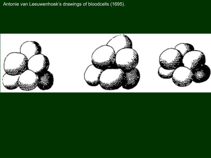 Antonie van Leeuwenhoek's drawings of bloodcells (1695).