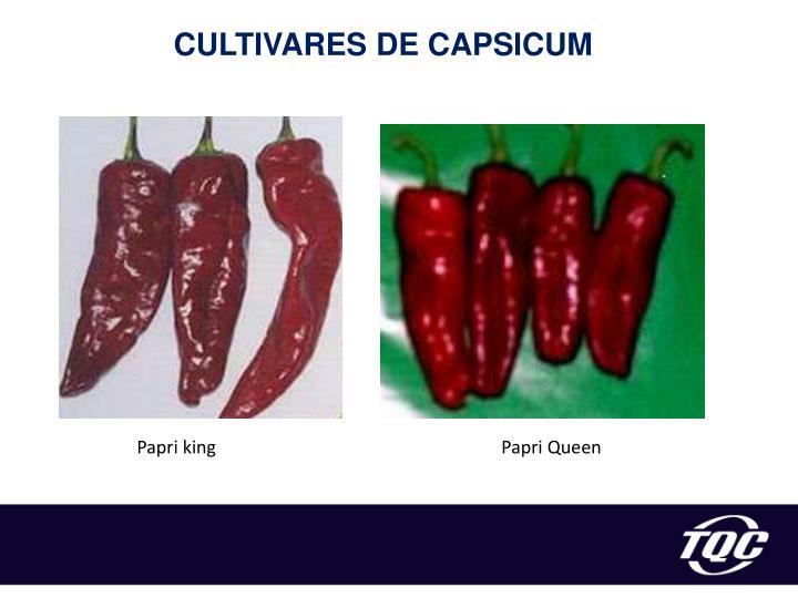 CULTIVARES DE CAPSICUM