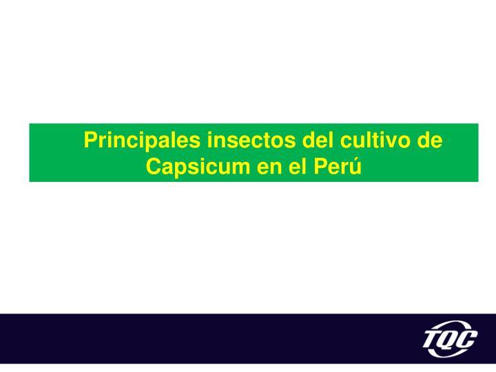 Principales insectos del cultivo de
