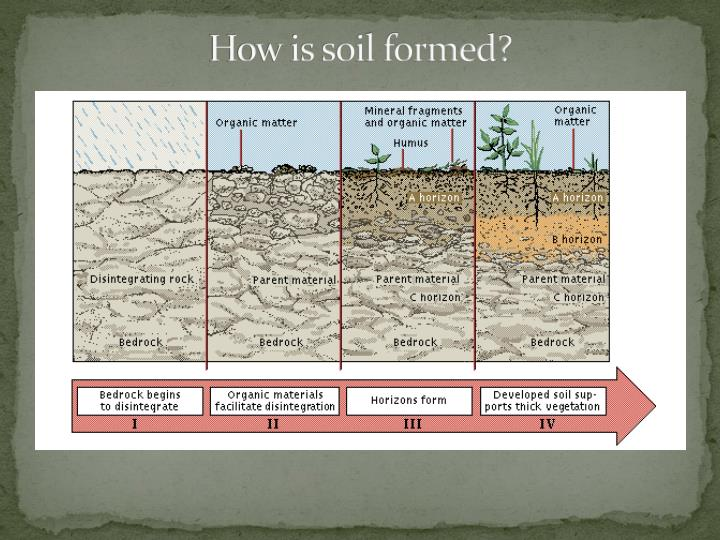 Ppt natural history of cleveland ust 259 powerpoint for Soil forming minerals