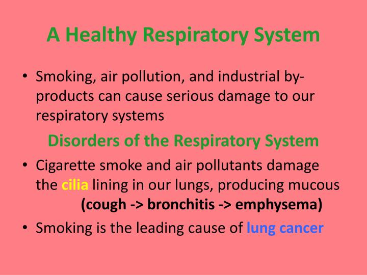 A Healthy Respiratory System