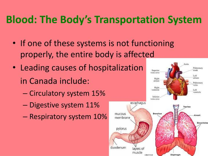 Blood: The Body's Transportation System