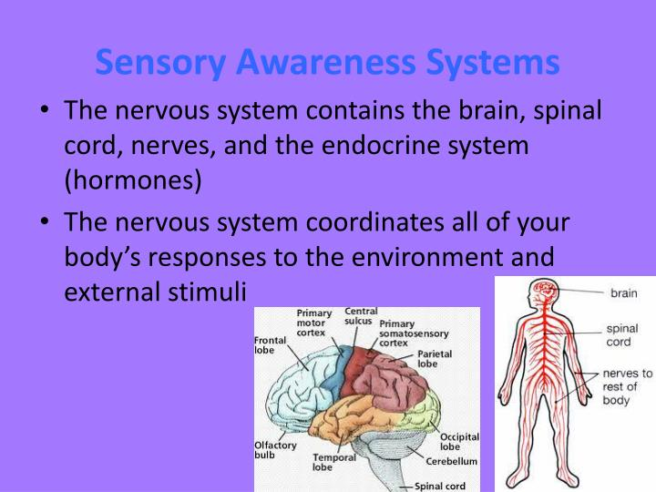 Sensory Awareness Systems