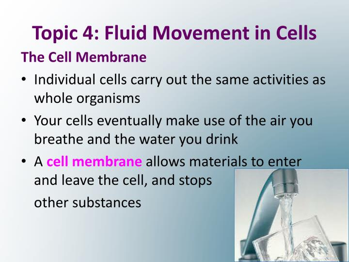 Topic 4: Fluid Movement in Cells