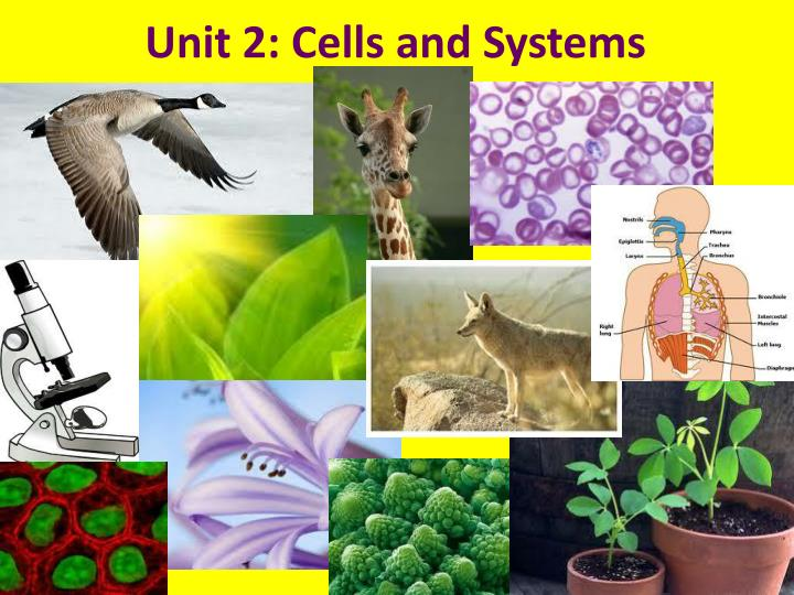 Unit 2 cells and systems