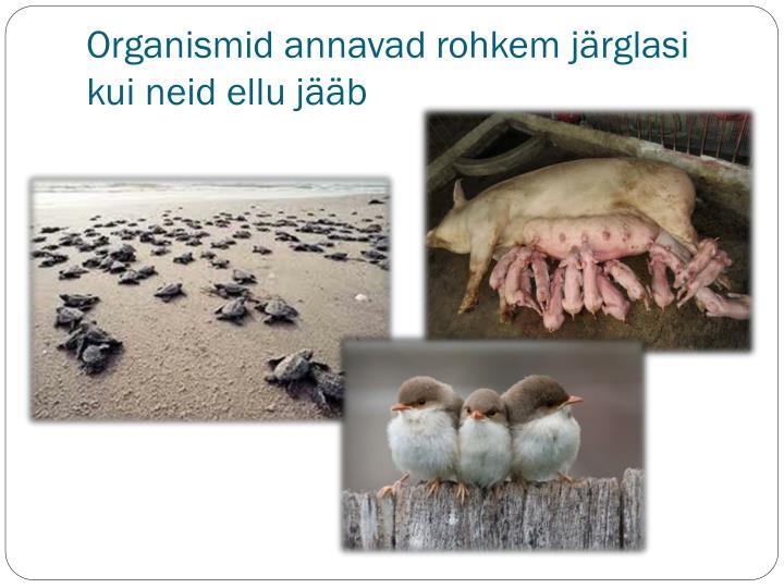 Organismid annavad rohkem järglasi kui neid ellu jääb