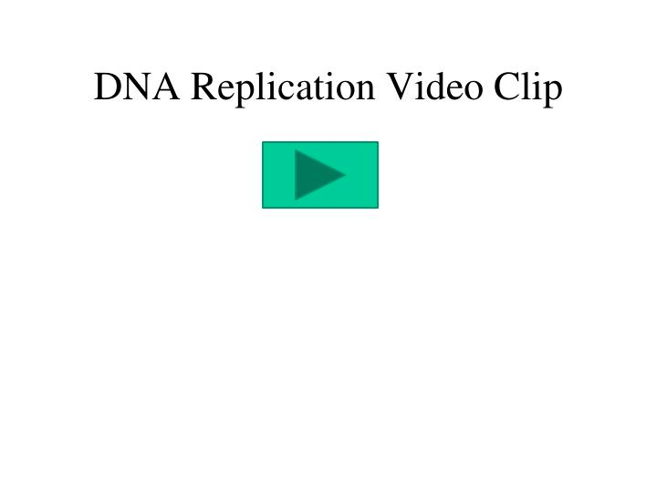 DNA Replication Video Clip