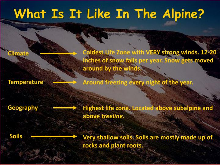 What Is It Like In The Alpine?