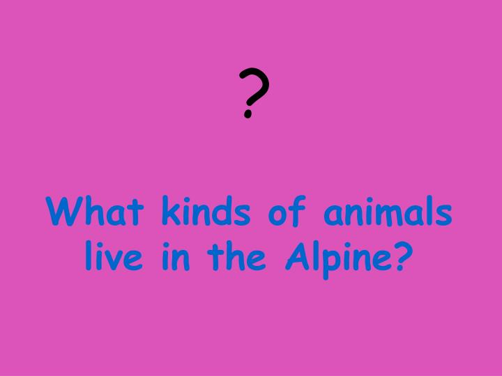 What kinds of animals live in the Alpine?