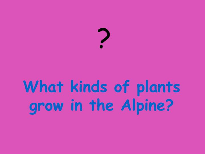 What kinds of plants grow in the Alpine?