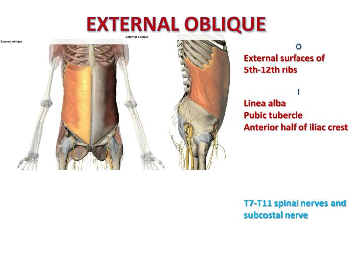 how to build external oblique muscle