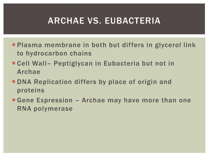 Archae vs. eubacteria