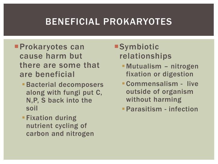 Beneficial prokaryotes
