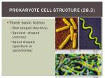 prokaryote cell structure 28 3