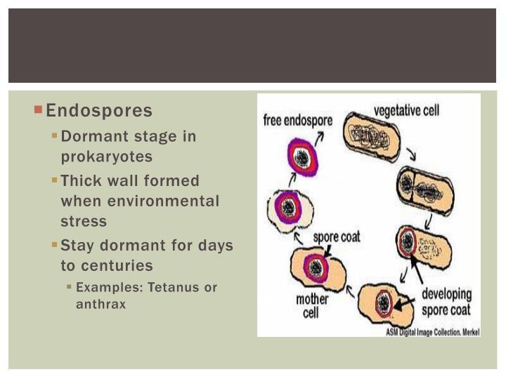 Endospores