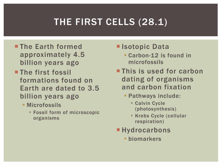 The first cells 28 1