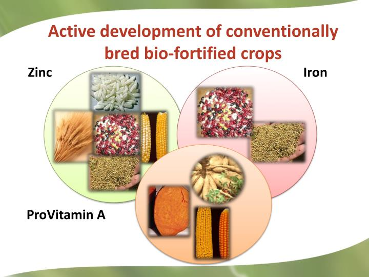 Active development of conventionally bred bio-fortified crops