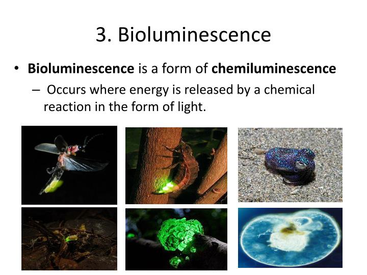 3. Bioluminescence